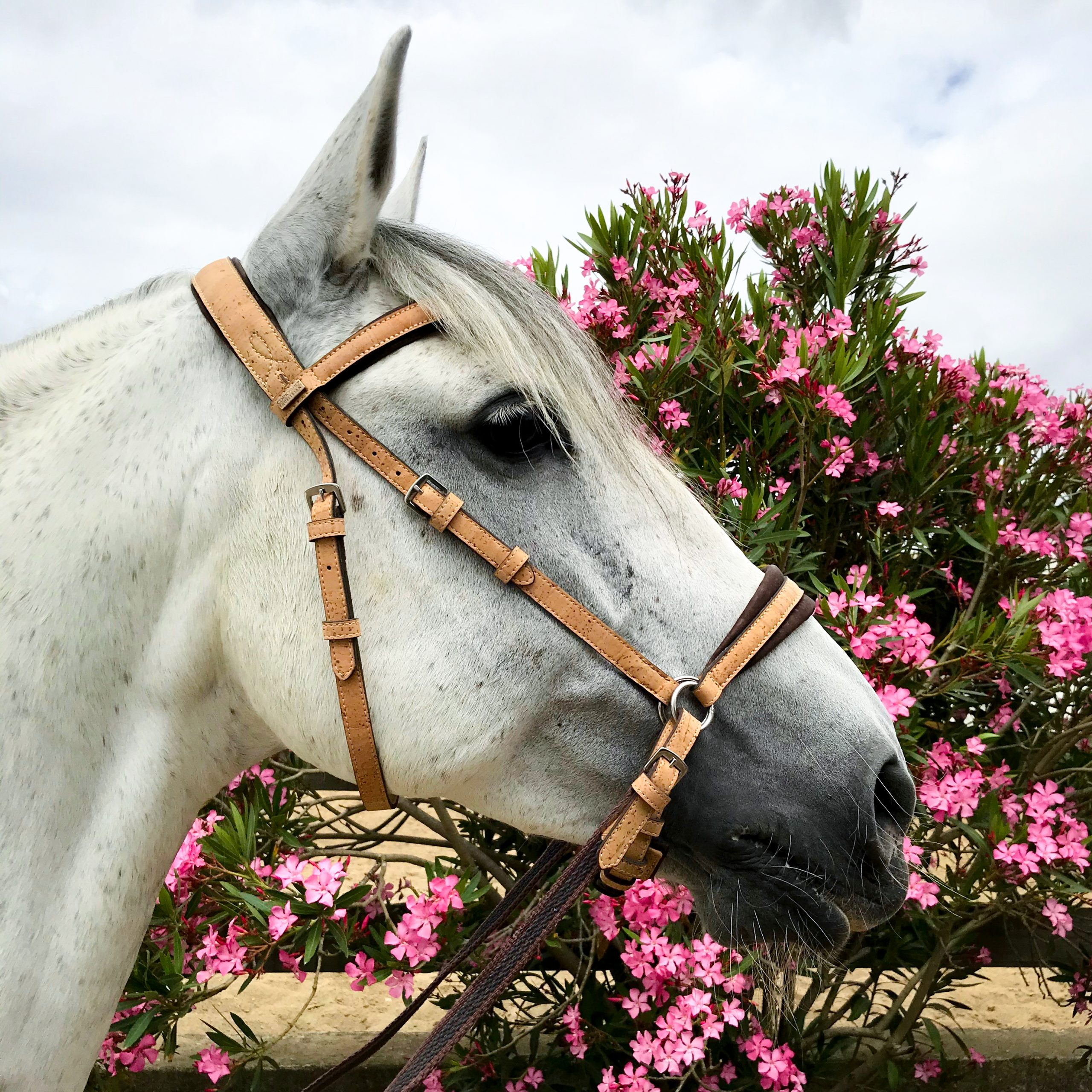 CorkYard Equestrian