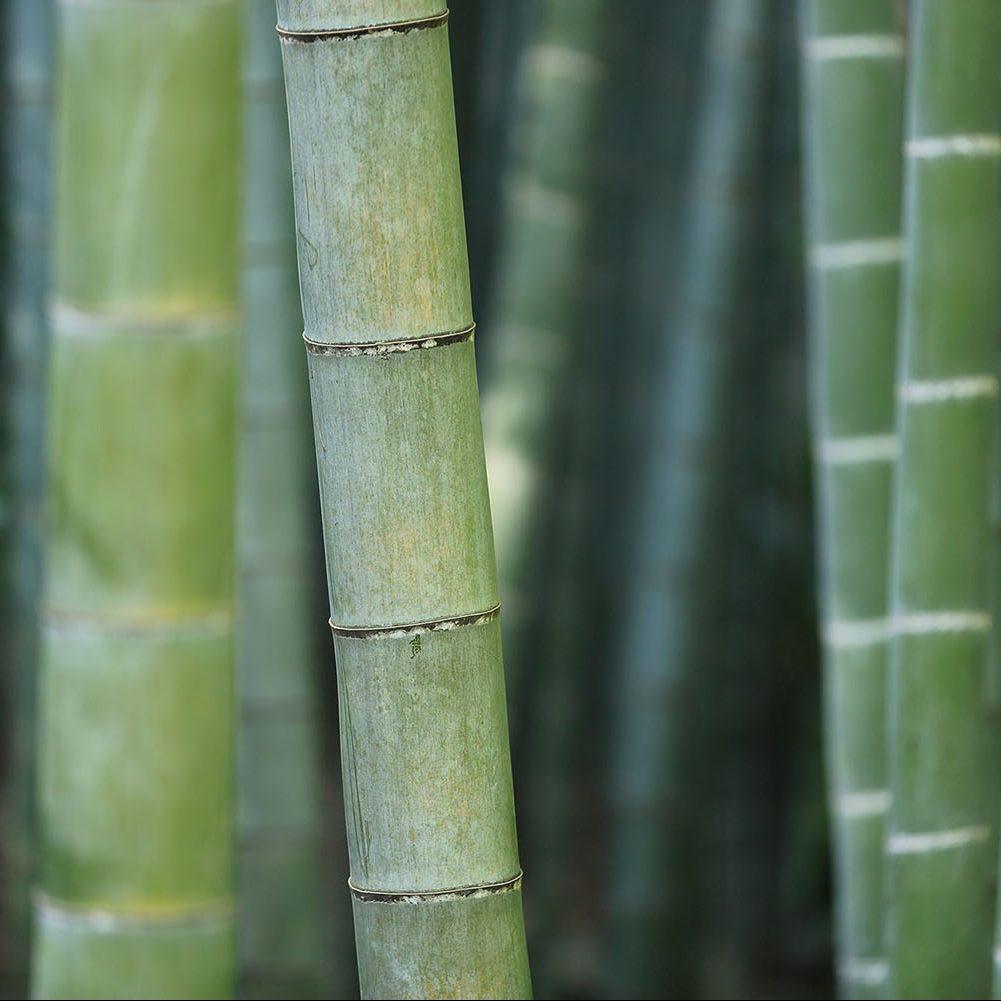 Zoom Matière : La viscose de bambou